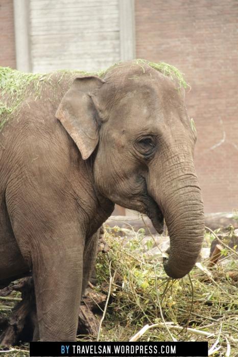 artis_elephant