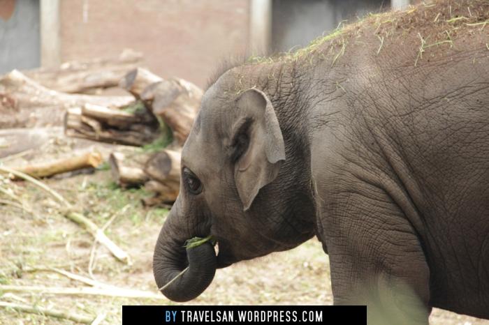 artis_elephant2