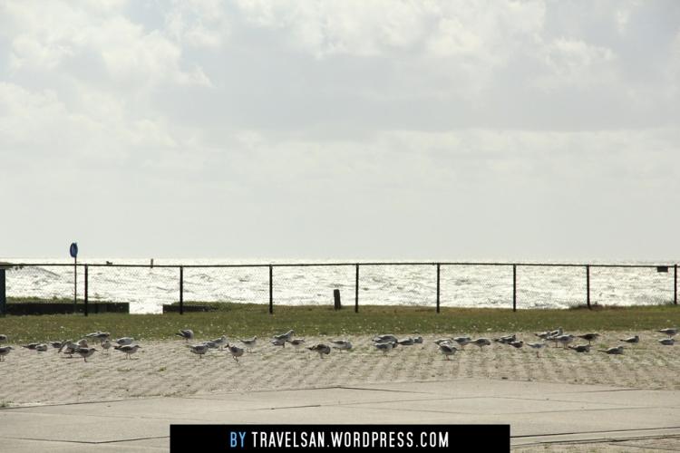 vlieland-seagulls