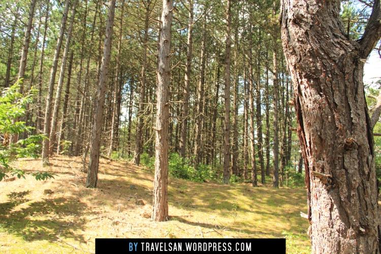 vlieland-trees