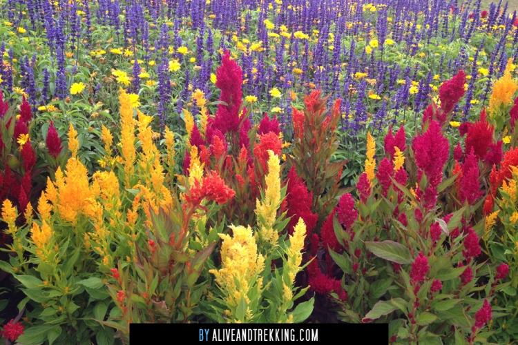 kapiti_flowers