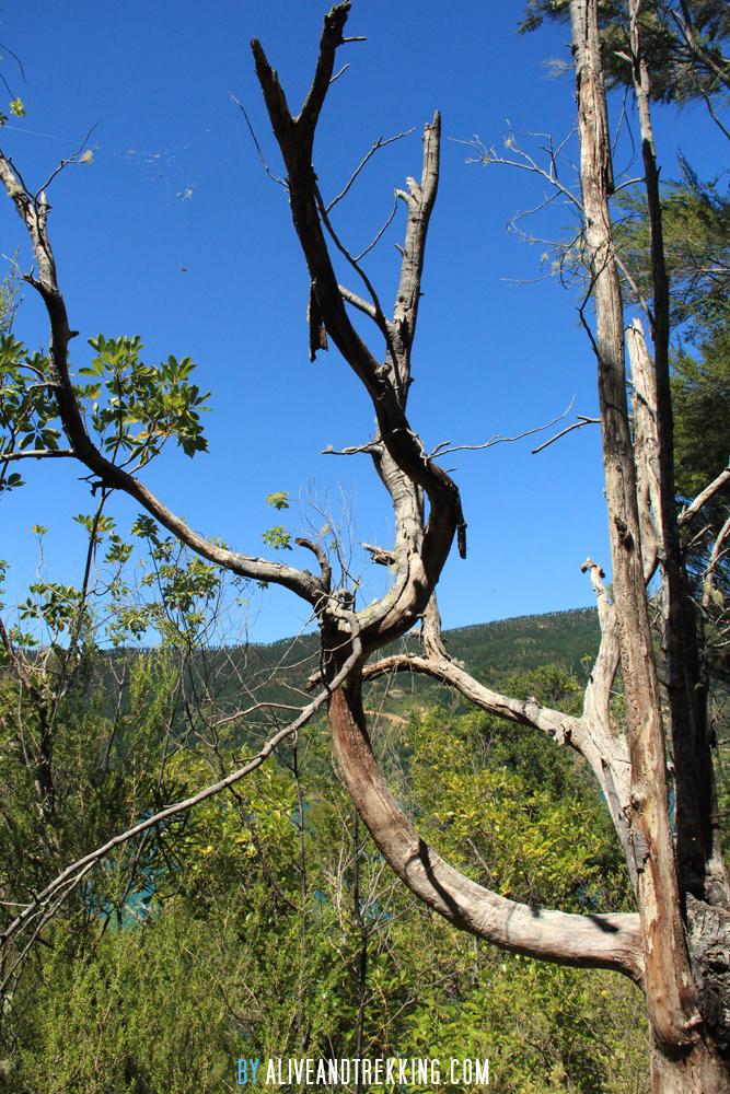 hopewell-bare-tree