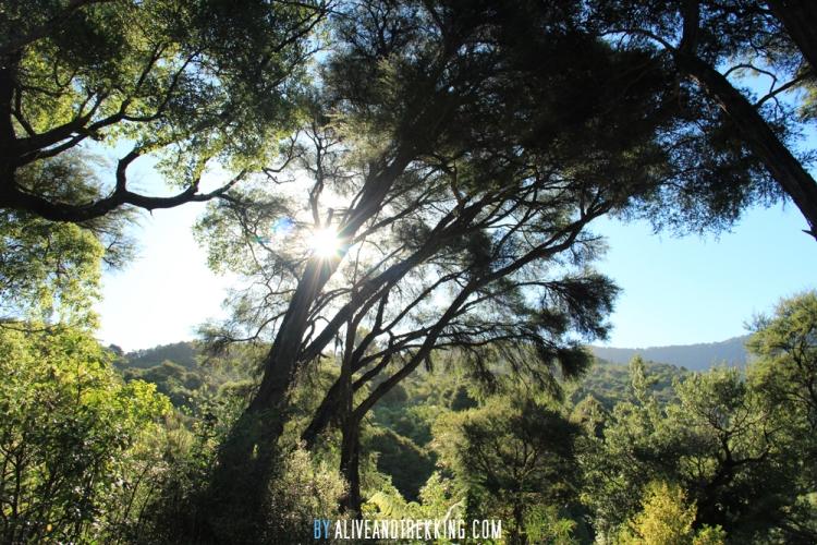 hopewell_trees