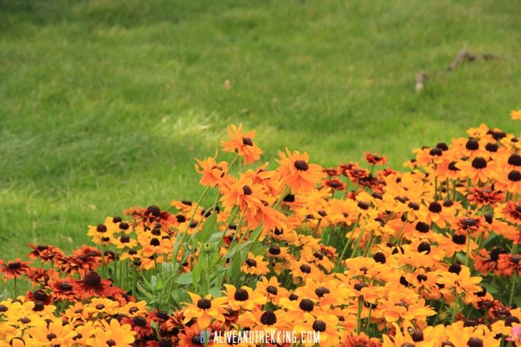 wellington-flowers