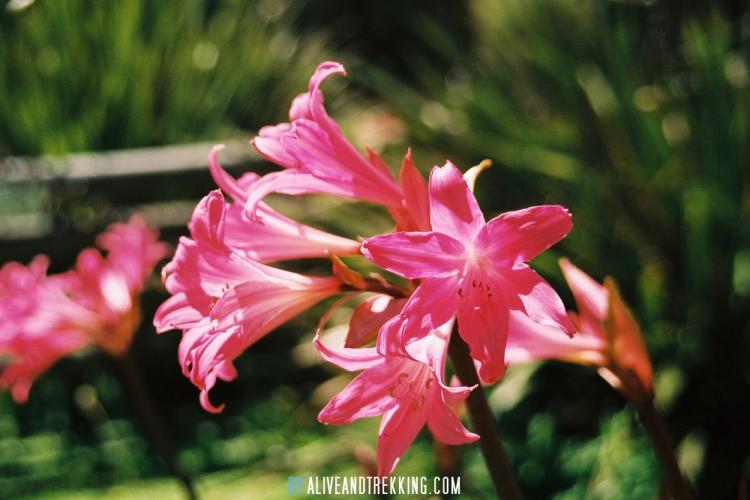 onuku-farmhostel_flower