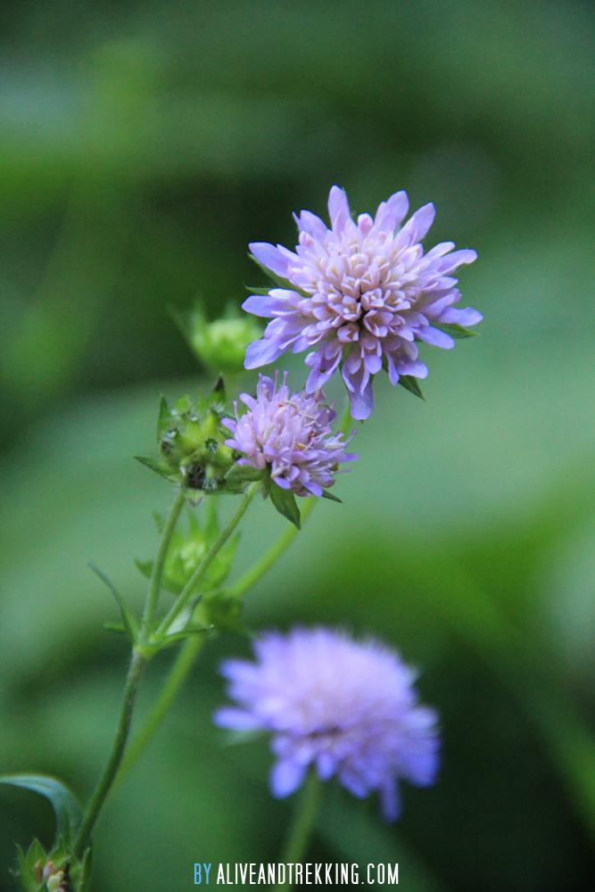 france_flower1