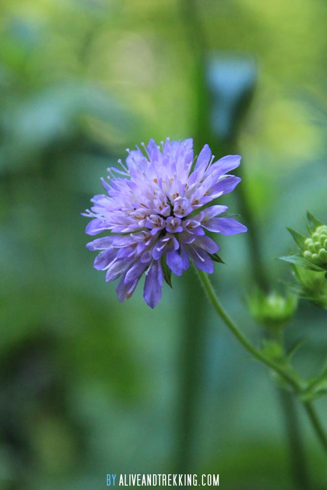 france_flower2