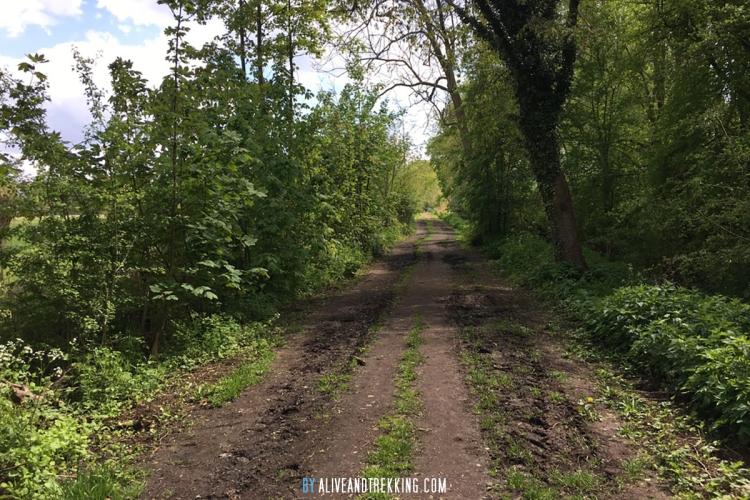 wwc_muddyforest